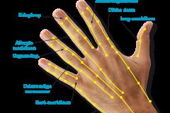 meridianen-hand